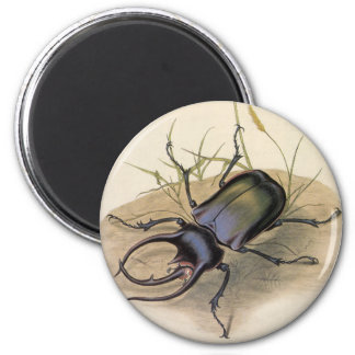 Vintage Insects and Bugs, Rhino Rhinoceros Beetle 6 Cm Round Magnet