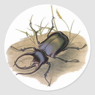 Vintage Insects and Bugs, Rhino Rhinoceros Beetle Round Sticker