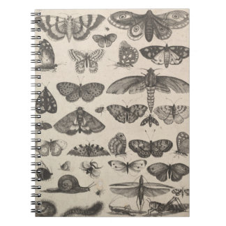Vintage Insects Entomology Lepidoptera Field Notes Notebook