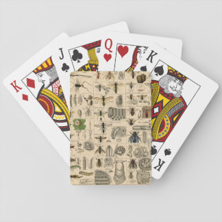 Vintage Insects Wasps Bees Entomology Taxonomy Playing Cards