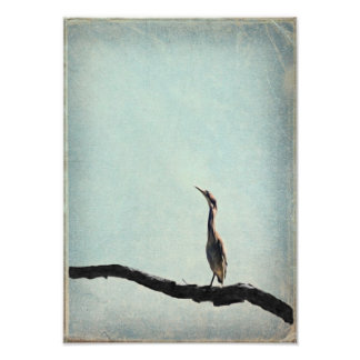 Vintage Inspired Green Heron on Pale Blue Sky Photo Art