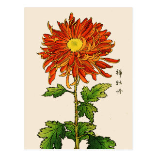Vintage Japanese Chrysanthemum. Orange and Gold Postcard