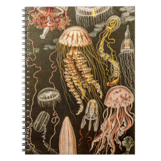 Vintage Jellyfish Antique Jelly Fish Illustration Notebook