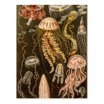 Vintage Jellyfish Antique Jelly Fish Illustration Post Card