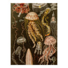 Vintage Jellyfish Antique Jelly Fish Illustration Poster