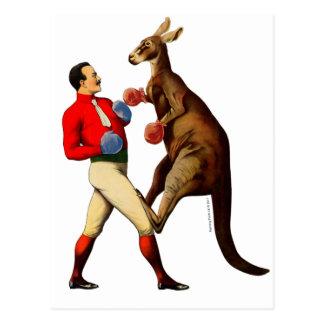 Vintage Kangaroo Boxer Boxing Sport Postcard