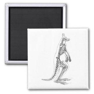 Vintage Kangaroo Skeleton Illustration -1800's Magnet