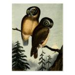 Vintage Kirtlands Owl Post Cards