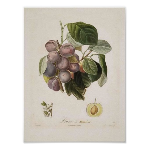 Vintage Wall Art For The Kitchen : Vintage plum poster zazzle