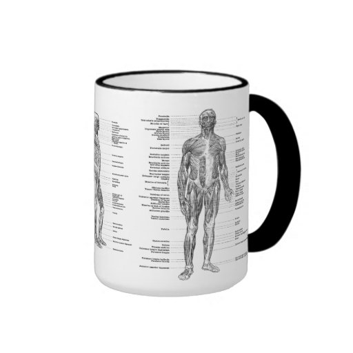 Vintage - Labeled Human Anatomy Muscles Mugs