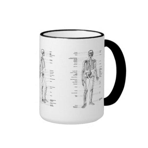 Vintage - Labeled Skeleton - Front, Back & Lateral Mugs