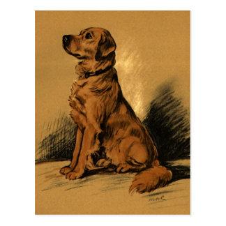 Vintage Labrador Postcard