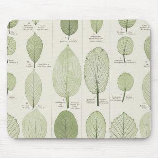 Vintage Leaf Illustrations Mouse Mat