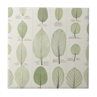 Vintage Leaf Illustrations Tile