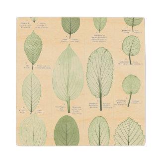 Vintage Leaf Illustrations Wood Coaster