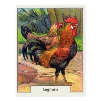 Vintage Leghorn Chicken Postcard