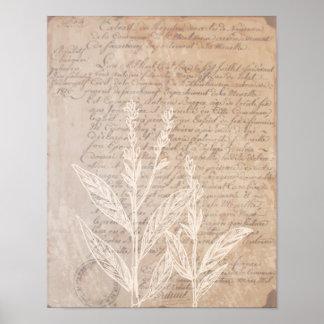 Vintage Letter and Botanical Print Poster