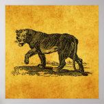 Vintage Lioness Illustration - 1800's Lion African