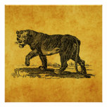 Vintage Lioness Illustration - 1800's Lion African Poster