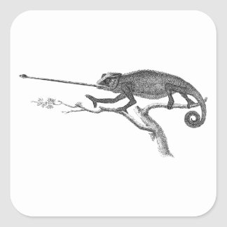 Vintage Lizard Chameleon Illustration Template Square Sticker
