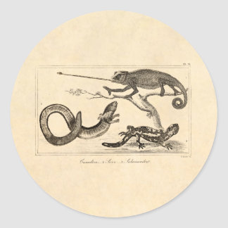 Vintage Lizard Chameleon Salamander Illustration Classic Round Sticker