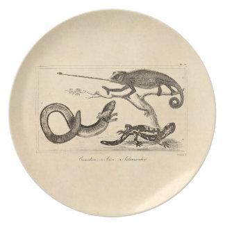 Vintage Lizard Chameleon Salamander Illustration Plate