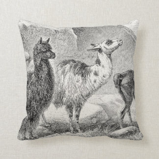 Vintage Llama Alpaca Template Llamas Alpacas Cushion