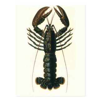 Vintage Lobster, Marine Ocean Life Crustacean Postcard