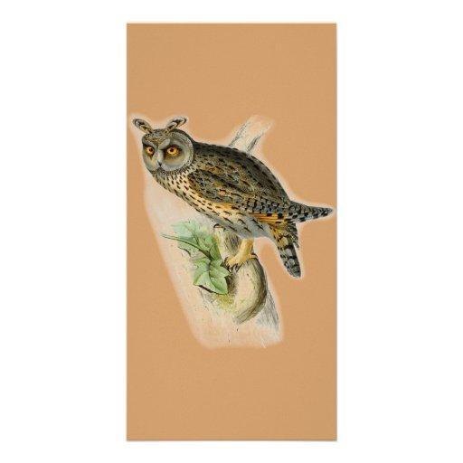 Vintage long eared owl asio otus customized photo card