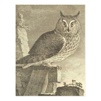 Vintage  Long Eared Owl Postcard