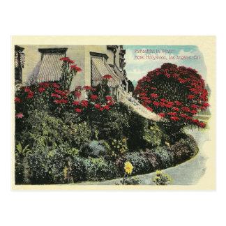 Vintage Los Angeles California Postcard