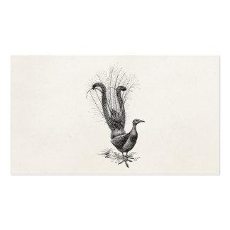 Vintage Lyre Bird Lyrebird Illustration Template Pack Of Standard Business Cards