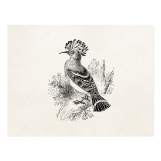Vintage Madagascar Hoopoe Bird Personalized Birds Postcard