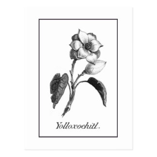 Vintage magnolia flower etching card