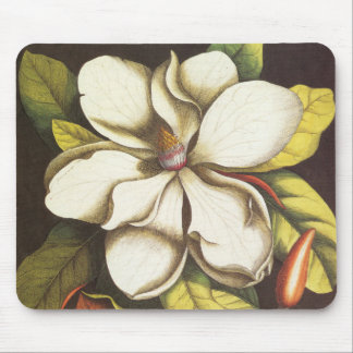Vintage Magnolia Flowers Plant With Seeds Mouse Mat