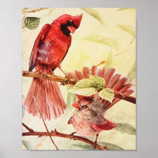 Vintage Male & Female Northern Cardinal Print