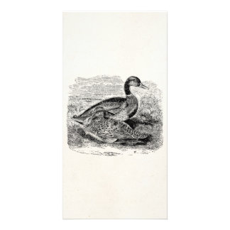 Vintage Mallard Duck Bird - Ducks Birds Template Photo Greeting Card