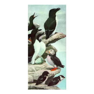 Vintage Marine Animal Life, Aquatic Birds Puffins Rack Cards