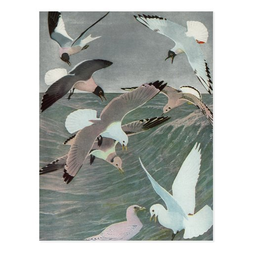 Vintage Marine Birds, Seagulls Flying over Ocean Post Card