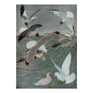Vintage Marine Birds, Seagulls Flying over Ocean Poster