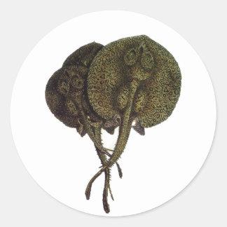 Vintage Marine Life Animal, Sting Rays Stingrays Round Sticker