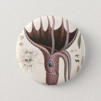 Vintage Marine Life Animals, Umbrella Squid 6 Cm Round Badge