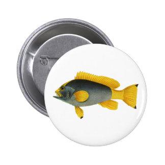 Vintage Marine Life Fish, Blue and Yellow Grouper 6 Cm Round Badge