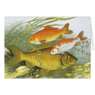 Vintage Marine Sea Life Fish, Aquatic Goldfish Koi Card