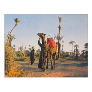 Vintage Marrakesh, Camels Postcard