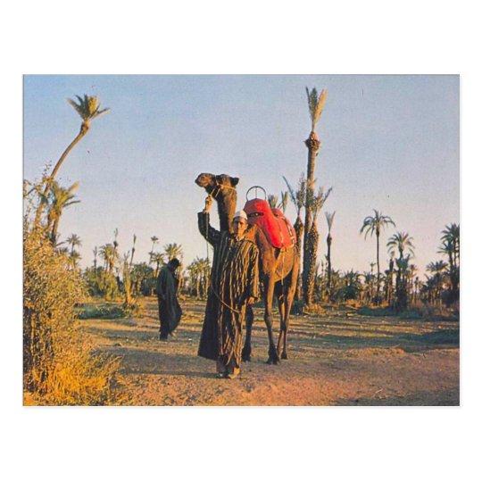 Vintage Marrakesh, Camels Postcard
