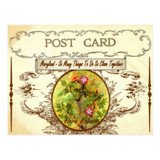 Vintage Maryland State Flower Postcard