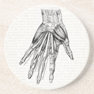 Vintage Medical Drawing Muscles of the Hand Beverage Coaster