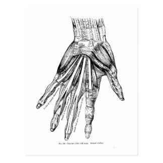 Vintage Medical Drawing Muscles of the Hand Postcard