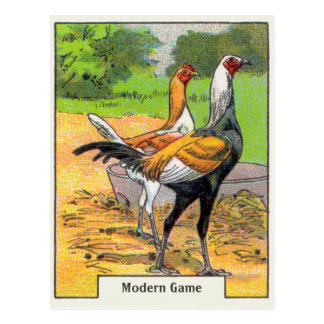 Vintage Modern Game Chicken Postcard